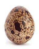 Quail egg closeup Stock Photo