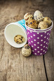 Quail Egg in cup Stock Images