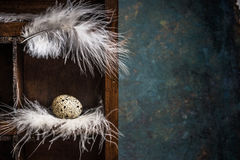 Quail egg on feathers  nest in wooden box. Vintage background for text. Royalty Free Stock Photography