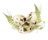 Quail Egg With Fern Royalty Free Stock Image