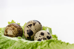 Quail egg and fresh salad. Against white background Stock Photography