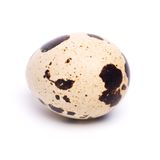 Quail egg. Fresh quail egg on a white background Stock Image
