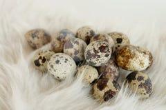 Quail egg fur easter Stock Photo