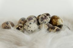 Quail egg fur easter Royalty Free Stock Images