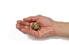 Quail egg in a hand Stock Photos