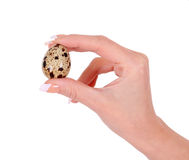 Quail egg in hand isolated on white Stock Photos