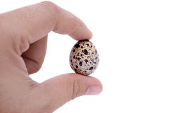 A quail egg with hand isolated on white background Royalty Free Stock Photography
