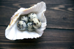 Quail egg in marine shell on the wooden table. Quail egg with others on the blurring effect in marine shell on the wooden table. Selective soft focuse Royalty Free Stock Image