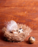 Quail egg near the nest with eggs Royalty Free Stock Photos