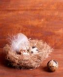 Quail egg near the nest with eggs Royalty Free Stock Photos