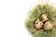 Quail egg in nest Royalty Free Stock Photography
