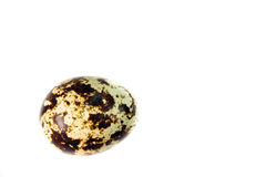 Quail egg Stock Images