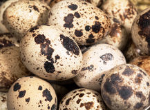 Quail egg pile. Quail eggs pile close up Stock Images