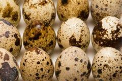 Quail egg Stock Images