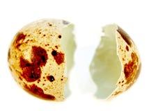 Quail egg shell. Stock Images