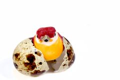 Quail egg shell with bird. Royalty Free Stock Photography