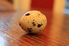 Quail egg. Single small quail egg on counter Royalty Free Stock Image