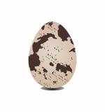 Quail egg Stock Image