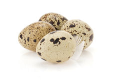Quail egg on white Stock Photography