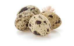Quail egg on white Stock Photos