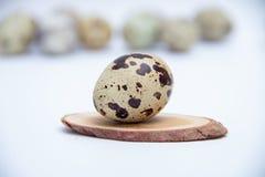 Quail egg on white background. Free copy space
