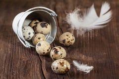 Free Quail Egg With White Feather Royalty Free Stock Photos - 29027548