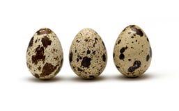 Quail eggs Stock Photography