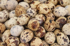 Quail Eggs. A shot of quail s eggs Stock Images