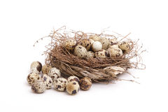 Free Quail Eggs Royalty Free Stock Images - 2124169