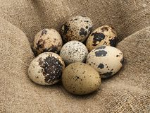 Quail eggs. Royalty Free Stock Photos