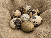 Quail eggs. Royalty Free Stock Photos
