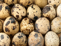 Quail eggs. Stock Photo