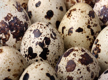 Quail eggs Stock Photo