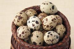 Quail eggs Stock Photo