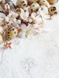 Quail eggs and almond flowers. On  a  wooden background Royalty Free Stock Photography