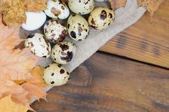 Quail eggs with autumn leaves on sacking on a dark brown wooden. Surface, top view, empty place for text, recipe Stock Image