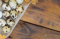 Quail eggs with autumn leaves on sacking on a dark brown wooden. Surface, top view, empty place for text, recipe Stock Photography