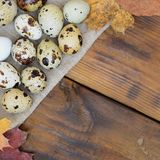 Quail eggs with autumn leaves on sacking on a dark brown wooden. Surface, top view, empty place for text, recipe Royalty Free Stock Photography