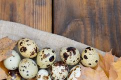 Quail eggs with autumn leaves on sacking on a dark brown wooden. Surface, top view, empty place for text, recipe Royalty Free Stock Image