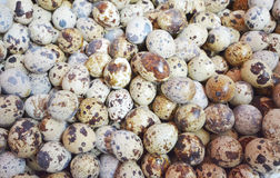 Quail eggs background Royalty Free Stock Photos
