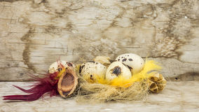 Quail eggs on the background of old boards (easter composition) Stock Photography