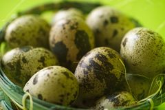 Quail Eggs in Basket Royalty Free Stock Image