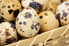 Quail eggs in basket. Quail eggs in wooden basket Stock Images