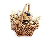 Quail eggs in a basket Stock Photography