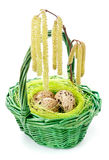 Quail eggs in the basket Royalty Free Stock Image