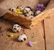 Quail eggs in basket Royalty Free Stock Photos