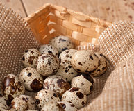 Quail eggs in basket Stock Image