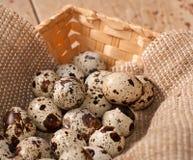 Quail eggs in basket. Fresh Quail eggs in the basket Stock Image
