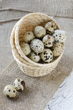 Quail eggs. In a basket Stock Image
