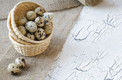Quail eggs. In a basket Royalty Free Stock Photo
